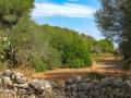 La végétation derrière la plage de S'Amarador dans le parc de Mondragó à Santanyí à Majorque