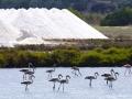 Salines d'Es Trenc-Flamingos