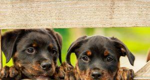 Neue Haustierverordnung
