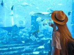Das Palma Aquarium muss schließen